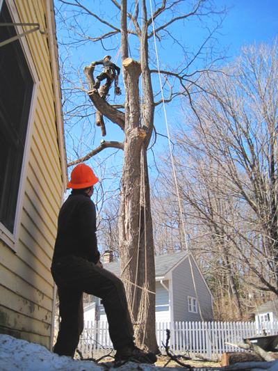 Lowering Tree Trunk Cutting House