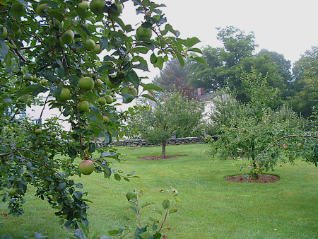 Fruit Trees Stonewall Apple