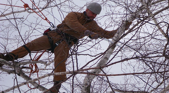 Jim McSweeney Pruning Tree Care