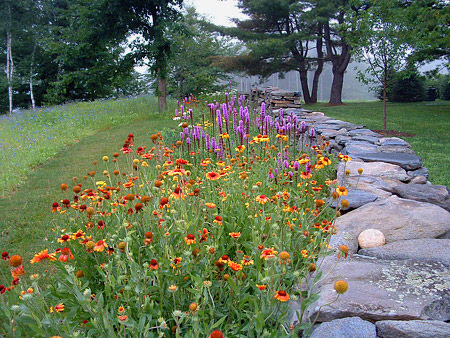 Hilltown tree and garden portfolio wildflower meadow for Perennial garden design
