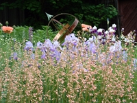 This low maintenance perennial garden has herbs, flowers and shrubs. Conway, MA