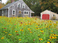 Meadow, Gardens, Patio, Orchard & Tree Care Wareham, MA. (Cape Cod)