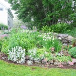 Stone Wall Native Plants Perennials Flowers Trees