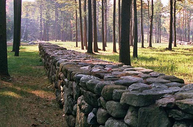 Forest Stone Wall